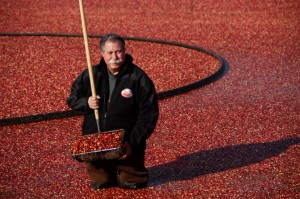 Cranberry-Grower